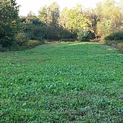 Food Plot Equipment and Seeds