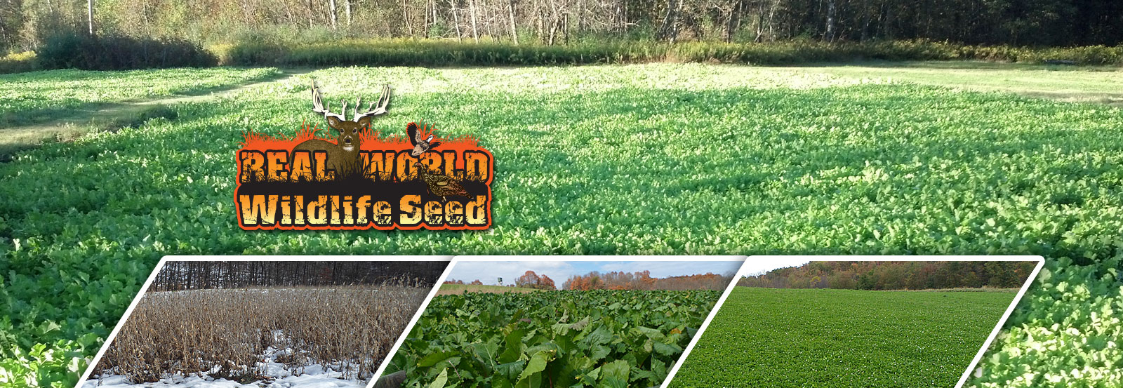 Real World Wildlife Food Plot Seeds